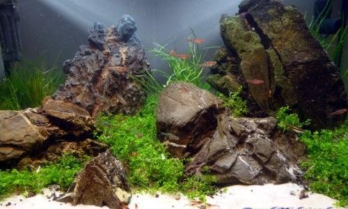 akwarium iwagumi 25l 2