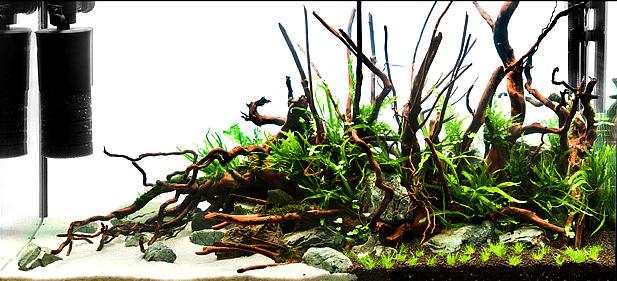 zakładanie i serwis akwariów roślinnych warszawa