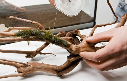zakładanie i serwis akwariów roślinnych