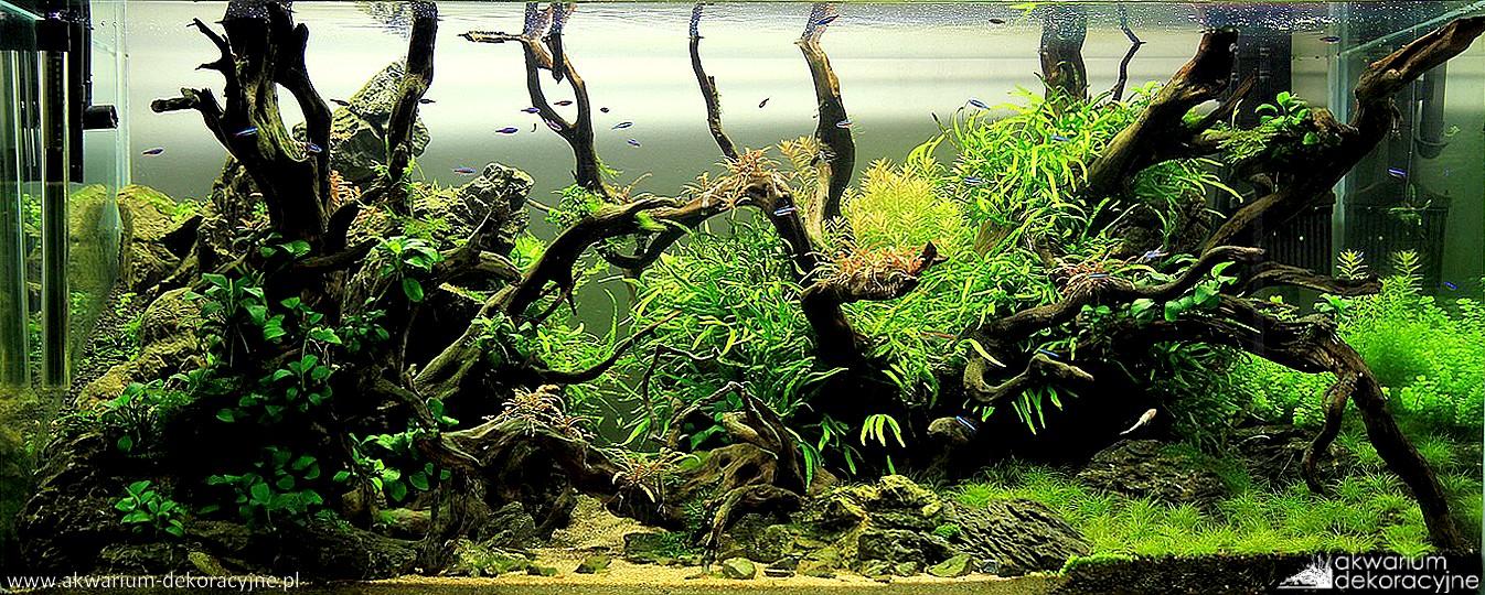 Akwarium dekoracyjne zakładanie akwarium zakładanie akwariów warszawa polska piaseczno akwarium naturalne nature aquarium aquascape