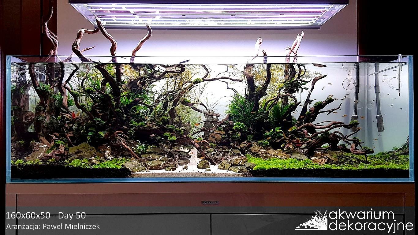 Akwarium dekoracyjne profesjonalne zakładanie akwarium dekoracyjne zakładanie akwariów serwis akwarium montaż akwariów zakładanie akwarium