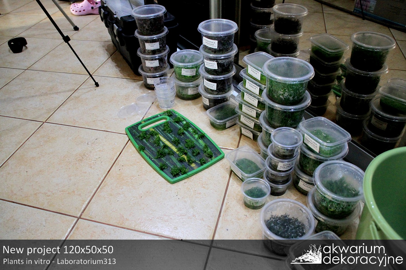 Akwarium dekoracyjne zakładanie akwarium zakładanie akwariów 1 warszawa polska akwarium naturalne nature aquarium aquascape IAPLC 2016 in vitro laboratorium 313