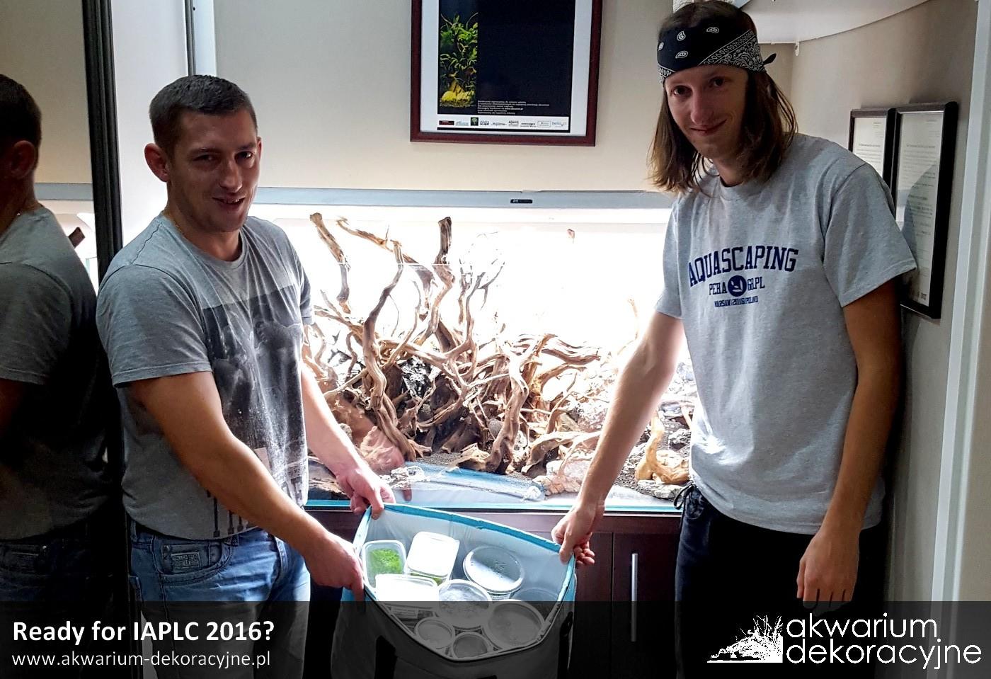 Akwarium dekoracyjne zakładanie akwarium zakładanie akwariów warszawa polska akwarium naturalne nature aquarium aquascape IAPLC 2016 in vitro laboratorium 313