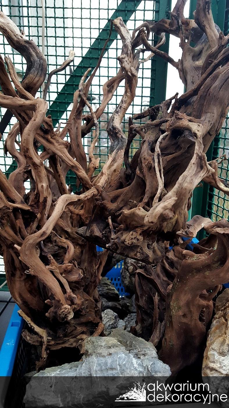 Akwarium dekoracyjne zakładanie akwarium zakładanie akwariów warszawa polska akwarium naturalne nature aquarium aquascape IAPLC 2016 korzenie red moor wood